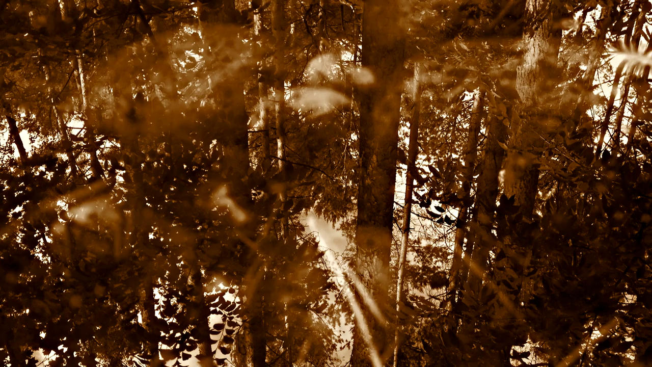 Slider Vorschaubild WaldTeich 720p